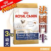BHN皇家FMBJ30法國鬥牛幼犬FBDP 3kg【寶羅寵品】