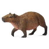 【永曄】collectA 柯雷塔A-英國高擬真動物模型-野生動物系列-水豚