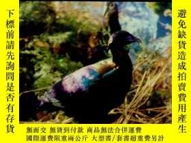 二手書博民逛書店THE罕見PICTORIAL HAND BOOK OF CHIN