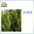 【綠藝家】K02.百里香種子200顆...