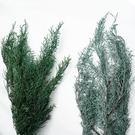 日本進口永生花花材,大地農園鹿角草,長約10公分,一份3克