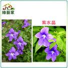 【綠藝家】H18.紫水晶(藍色,高25~...