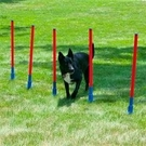 DAWP-6 犬類敏捷訓練 寵物健身器材 寵物戶外遊戲柱 寵物障礙訓練 美國寵物第一品牌LIXIT®