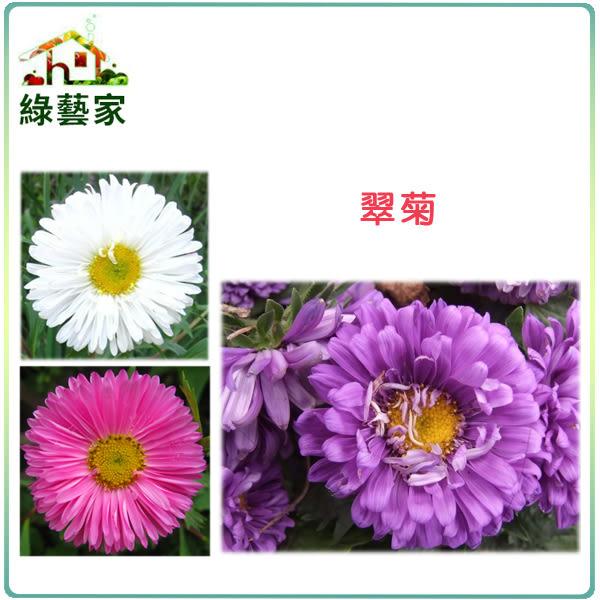 【綠藝家】大包裝H21.翠菊(蜜蕾,混合色,高25cm)種子450顆