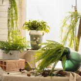 高仿真綠植插花 大蕨葉仿真蕨葉 植物墻配葉裝飾品