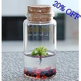 植物盒子 捕蠅草瓶栽 食蟲植物 琉璃石款 8折促銷
