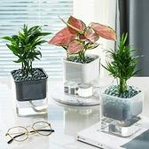 室內自動吸水透明水培花盆栽 盆栽 室內盆栽