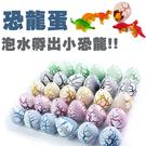 孵蛋 恐龍蛋 孵化 恐龍  暴龍 模型 侏儸紀世界 益智 玩具 幼教 泡水 膨脹 兒童節 禮物 侏儸紀世界