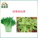 【綠藝家】A24.白骨空心菜種子500顆...