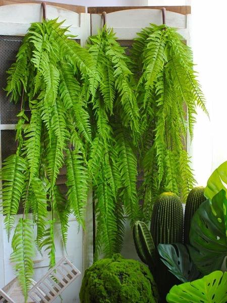 仿真大號蕨類壁掛仿真超長綠色植物背景墻上裝飾櫥窗