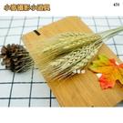 【唯蓁網431】天然麥子麥穗 1束15個...