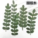 胡椒木葉片 ,一包10片裝,尺寸4-7公分,原色未染,乾燥後偏暗綠