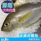 【台北魚市】  澎湖黃雞魚  350g±...