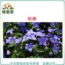 【綠藝家】H35.桔梗(高30~50cm...