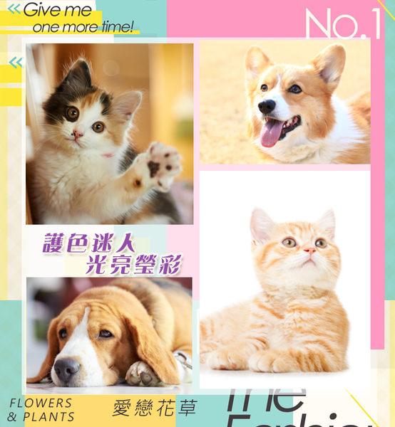 伊蘭花精油★護色瑩彩寵物潤絲精 500ML/六瓶組