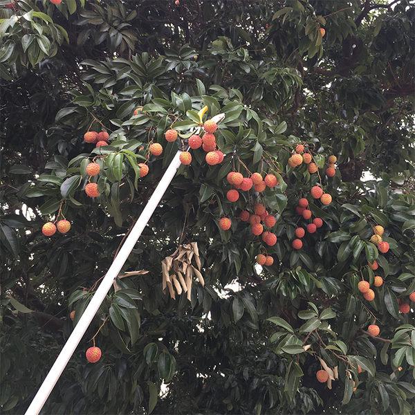 摘果器 高枝剪鋸樹枝摘果剪刀園藝高空果樹修枝剪摘果器伸縮高枝剪采果器 名優佳居 igo
