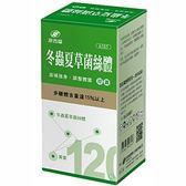 港香蘭 冬蟲夏草菌絲體 膠囊 500mg × 120粒 (一個月量)