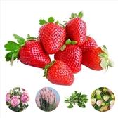 CARMO冬季園藝種子特輯(5款選1) 蝦皮團購【FR1001】