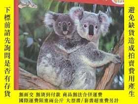 二手書博民逛書店Koala,罕見champion descalade (le) (Français)精裝法語原版書Y18233