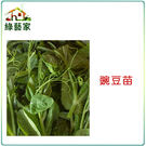 【綠藝家】大包裝E07.豌豆苗(快炒店的豆苗菜)種子600克