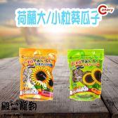 【殿堂寵物】canary荷蘭 大/小粒葵瓜子