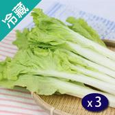 【產銷履歷】鮮採小白菜(250g±5%/包)X3【愛買冷藏】