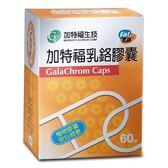 加特福~乳鉻膠囊60粒/盒(奶素) ~特惠中~
