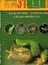 二手書R2YB2003年10月二版《臺灣31種蛙類圖鑑》陳王時 臺北市野鳥學會9