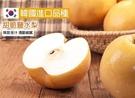 【果之蔬】韓國特大XL甜潤水梨禮盒X1顆(每顆約400g±10%)