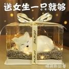 生日禮物女生閨蜜女孩送女友朋友創意精致特別走心小的實用聖誕節 MBS「時尚彩紅屋」