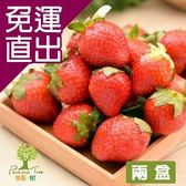 樂園.樹. 無農藥草莓鮮果600g/盒(共2盒)【免運直出】