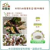 【綠藝家】A101.紅蘿蔓萵苣(歐洲)種子2克(約2000顆)