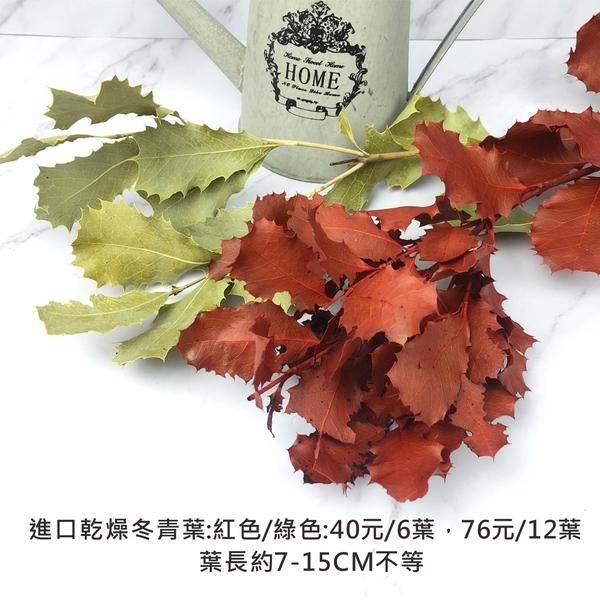 進口乾燥冬青葉 乾燥花 不凋花 捧花花束 店面佈置 居家裝飾 插花花瓶 拍照道具-76元/12葉