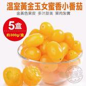 【果之蔬-全省免運】溫室黃金玉女蜜香小番茄X5盒(300g±10%含盒重/盒)
