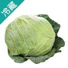 產銷履歷高麗菜1粒(1.2kg±5%/粒...