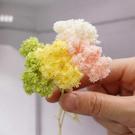 日本進口永生花花材,大地農園雪絨花,一份約8公分,一克裝