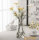 日系錘紋透明玻璃花瓶簡約創意水培插花花器【小獅子】