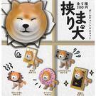 全套5款【日本正版】卡頭柴犬 珠鍊吊飾 扭蛋 轉蛋 柴犬 吊飾 - 370827