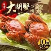 台灣珍稀大閘蟹*10隻組-死蟹包退(5-5.5兩/隻)(食肉鮮生)