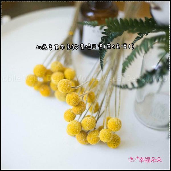 黃金球 乾燥花 1束9支 金杖菊不雕花 居家擺飾 DIY乾燥花材 拍照道具 擺設佈置 生日送禮