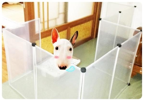 單片【百變寵物圍欄】多功能透明圍片小狗屋 狗籠 圍籠 柵欄