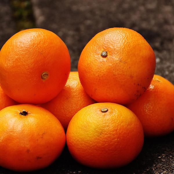 【鮮果禮盒】橘二代 茂谷柑鮮果禮盒(一盒免運)(5斤裝)(固定每周三出貨)