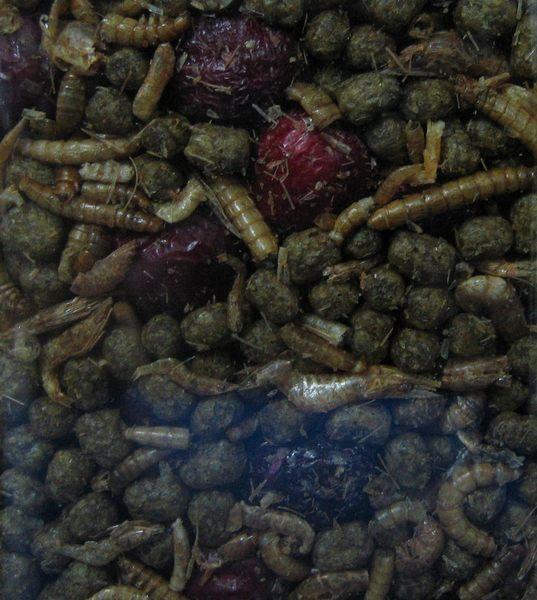 【西高地水族坊】ZOO MED  精緻雜糧水龜飼料 (340g)-麵包蟲.乾燥蝦.小魚乾.紅棗