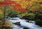 日本自然風景圖  奧入瀨峽谷 秋天風景 ...