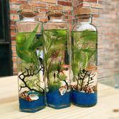 生態瓶 斑馬魚活體生態瓶魚微景觀免換水辦公室寵物觀賞魚玻璃魚缸造景   非凡小鋪