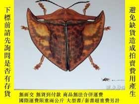二手書博民逛書店Leaf罕見Beetles : Micro Presence book chrysomelidae insect