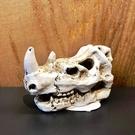 飾品【恐龍化石 犀牛頭S】 打造侏羅紀魚缸 造景裝飾 魚缸擺設 飾品 化石 魚事職人