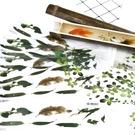 植物浮萍素材,水晶滴膠貼紙,單張