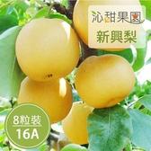 沁甜果園SSN.苗栗卓蘭新興梨(16A,8粒裝)﹍愛食網