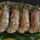 【極鮮號】野生海草蝦(大肥豬)8隻入(約125克/1隻)